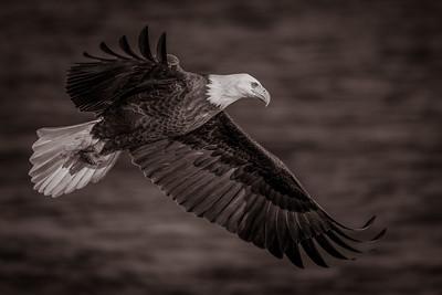 DA061,DB,Eagle