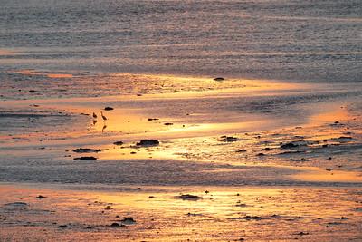 Sunset Wheeler Marsh