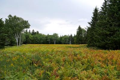 Petit Manan Field