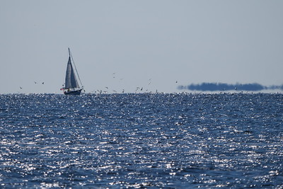 Sailboat & Gulls