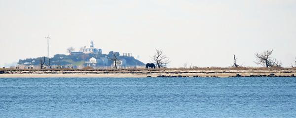 Horse on Ram Island, Little Dumpling Island in Distance