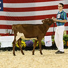 AADS18-Shorthorn-5896