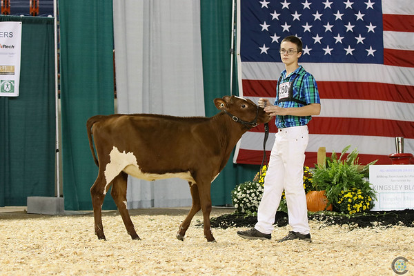 AADS18-Shorthorn-5894