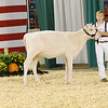 AADS18-Shorthorn-5899