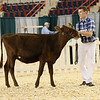 AADS18-Shorthorn-5901