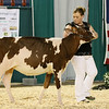 AADS18-Shorthorn-5900