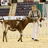 AADS18-Shorthorn-5902