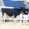 AADS18-Holstein-9225