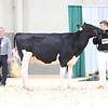 AADS18-Holstein-9218