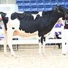 AADS18-Holstein-9206