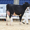 AADS18-Holstein-9211