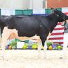 AADS18-Holstein-9213