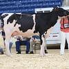 AADS18-Holstein-9226