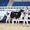 AADS18-Holstein-8389