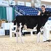 AADS18-Holstein-8386
