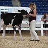 AADS18-Holstein-8387