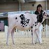AADS18-Holstein-8383