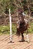 Ant18_D2_LAPB- 0053
