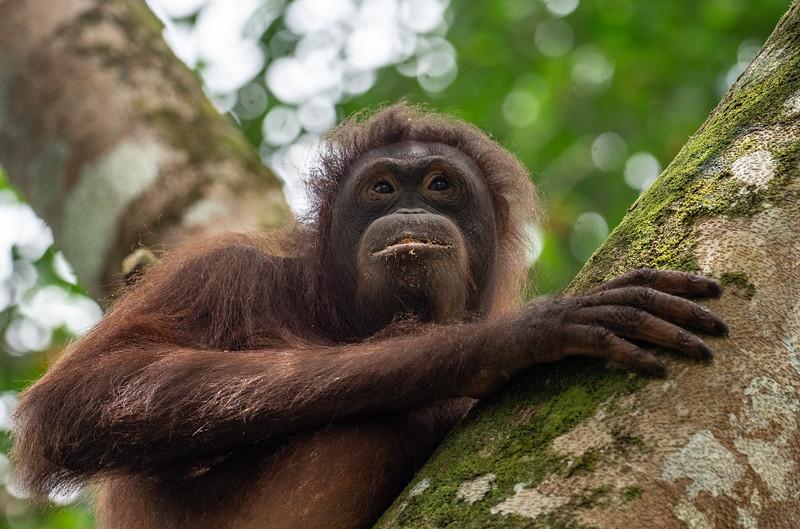 April - Borneo
