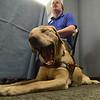 MET 041318 SERVICE DOGS 02 PRICE
