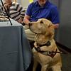 MET 041318 SERVICE DOGS 01PRICE