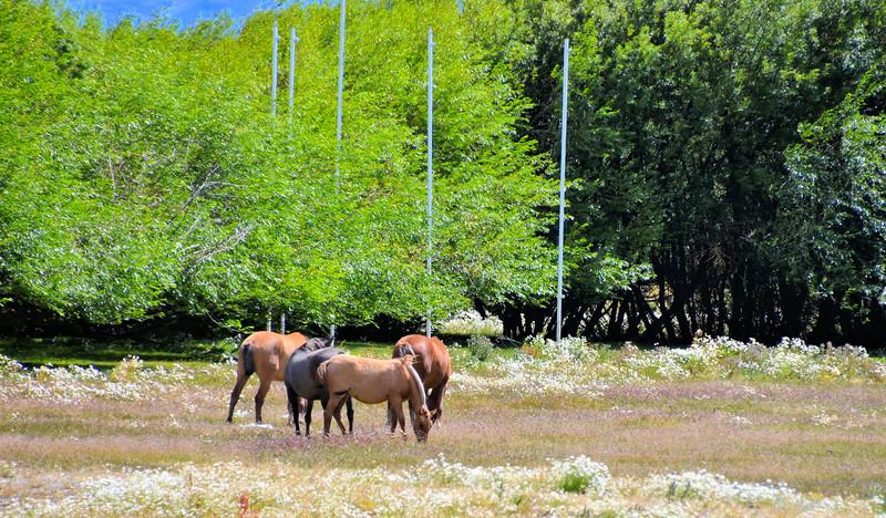 Horses along the Rambla (Paseo Kitchener)