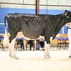 AtlanticSpring18-Holstein-0944