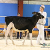 AtlanticSpring18-Holstein-2