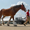 MET 081318 Clydesdale