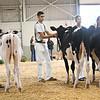 BigE18_Holstein-3973