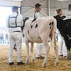 BigE18_Holstein-3971