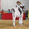 BigE18_Holstein-3967