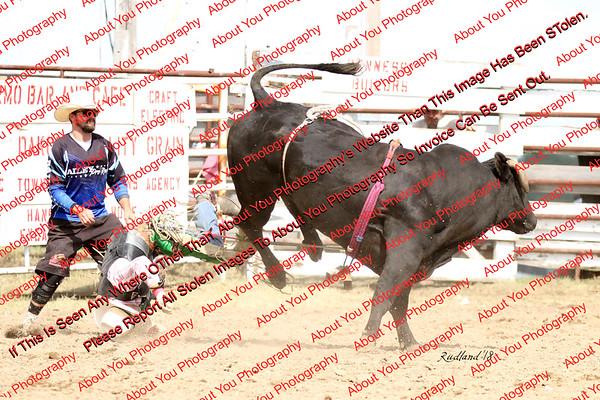 BLY18_Bulls- 0100