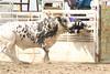 BLY18_Bulls- 0052