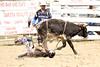 BLY18_Bulls- 0037