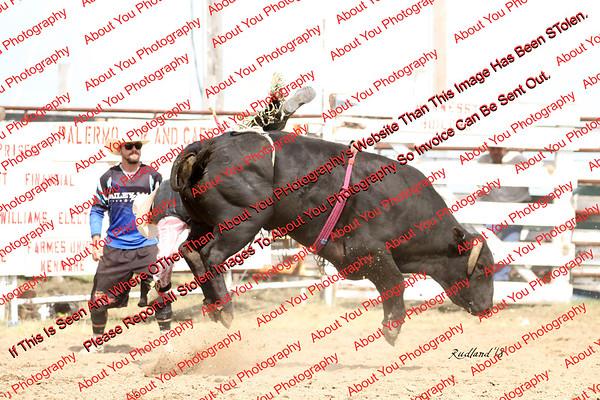 BLY18_Bulls- 0099