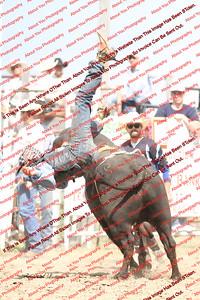 BLY18_Bulls- 0011
