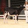 CalgaryDairyClassic18_Holstein-0034