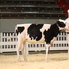 CalgaryDairyClassic18_Holstein-0033