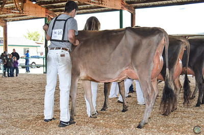 California State Jersey Cow Show 2018