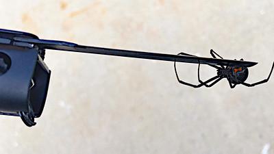 LighterBroCrop-7
