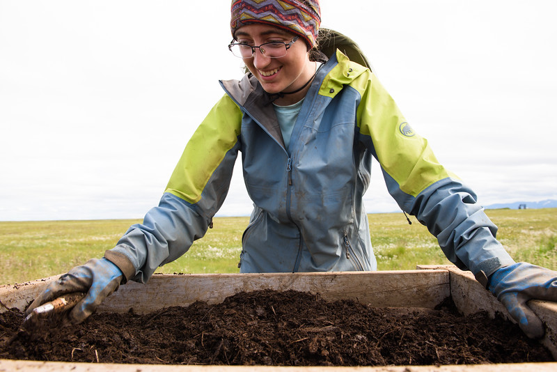 Lauren Phillips sifts through dirt excavated from the Nunalleq dig site on July 24, 2018. Photo by Katie Basile.