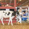 CTState18_Holstein-0522