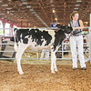 CTState18_Holstein-0517