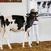CTState18_Holstein-0515
