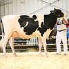 EOWQ18-Holstein-7514