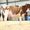 EOWQ18-Holstein-7503