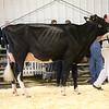 EOWQ18-Holstein-7502