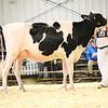 EOWQ18-Holstein-7515