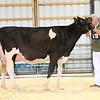 EOWQ18-Holstein-7495